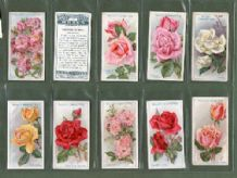 Tobacco cigarette cards Roses 1926 set of 50